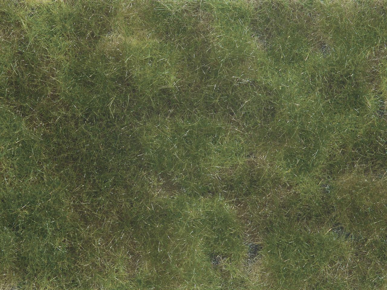 Bodend.-Foliage olivgrün